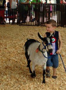 CloverbudParade.Boy and goat
