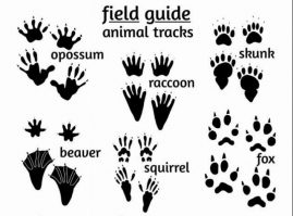 Animal tracks & signs